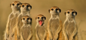 Meerkat-twitter-periscope