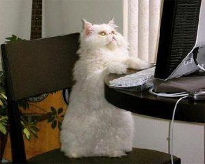 gato-chatiando