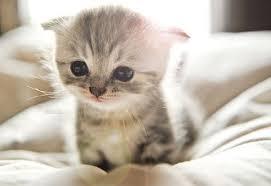 gatitos-redes-sociales