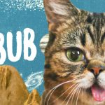 Lil bub. Una gatita con más de 200.000 fans